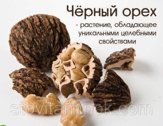 Настойка черного ореха: свойства и применение