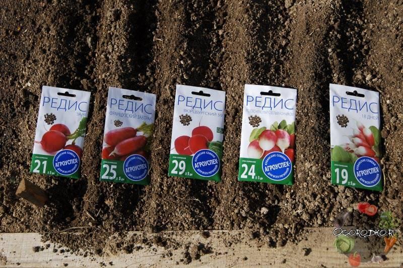 Рассада редиса: можно ли выращивать овощ через побеги, когда это лучше делать, как сеять в улитку, что подъедает всходы, что делать, если они вытянулись?