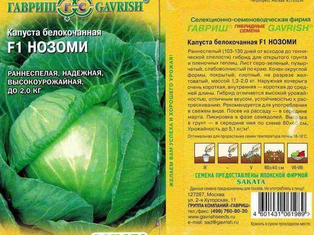 Особенности сорта капусты бронко
