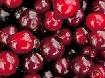 Брусницына — сильный сорт вишни, подходящий для выращивания в северных регионах