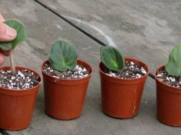 Перлит и вермикулит для растений
