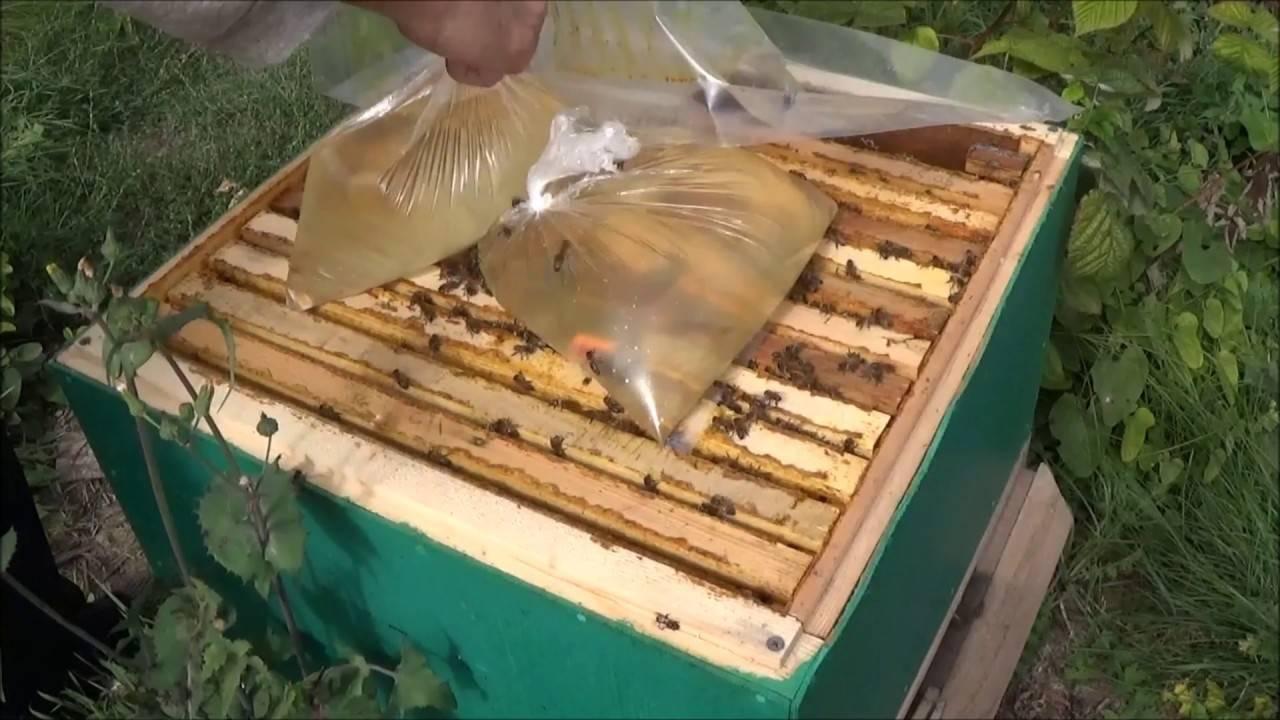 Способ применения и дозировка апимакса для пчел