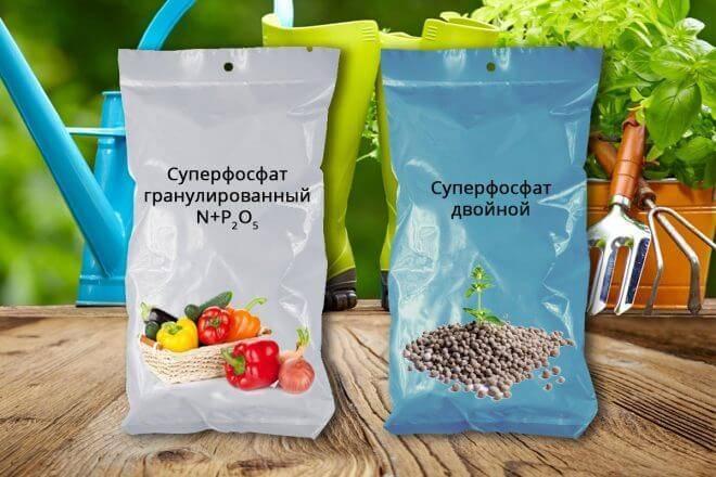 Суперфосфаты: состав удобрения, инструкция по применению простых суперфосфатов на огороде осенью, как быстро растворить в воде гранулированные удобрения