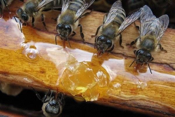 Все про пчелиные лекарства