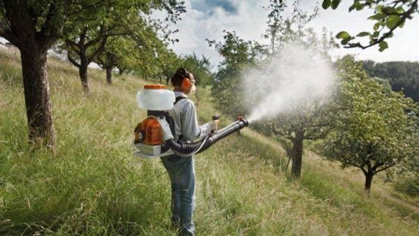 Чем рекомендуется опрыскивать плодовые деревья осенью
