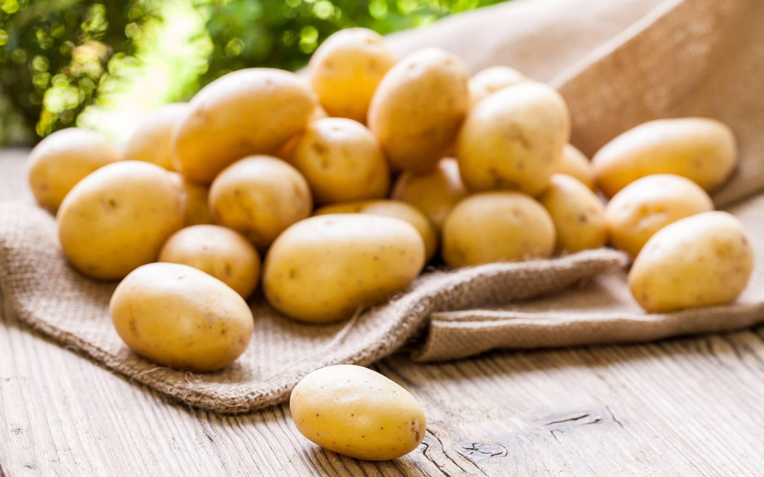 Как правильно посадить картофель для хорошего урожая