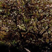 Пересадка вишни на новое место