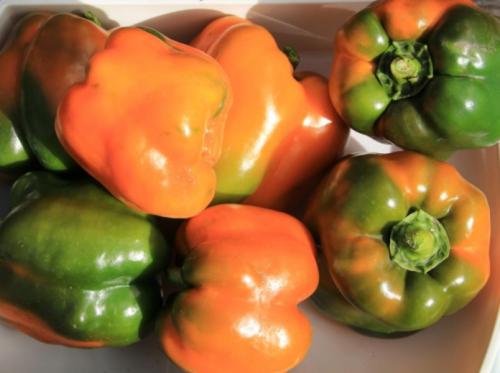 Перец сорта «биг мама»: основные характеристики и агротехника культуры