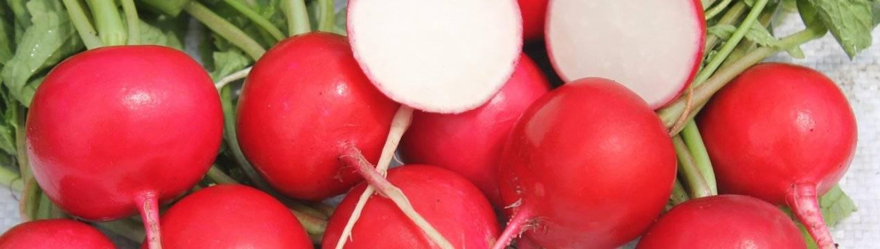 Лучшие сорта баклажан для теплиц и открытого грунта - 24 самых вкусных баклажана | красивый дом и сад