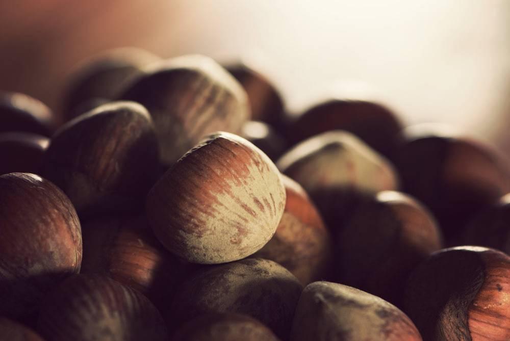 Как посадить грецкий орех из ореха в домашних условиях