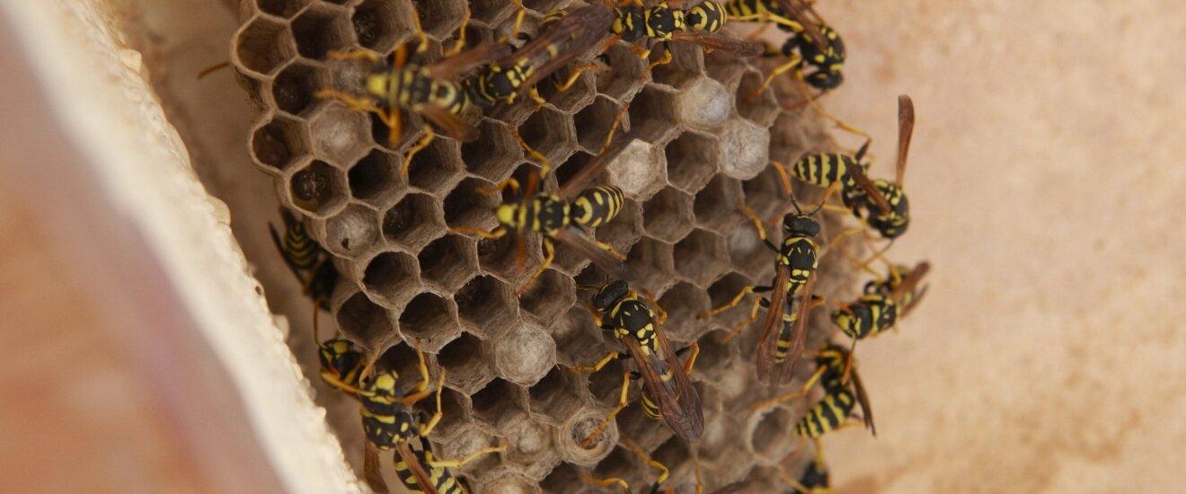 Средство от пчел