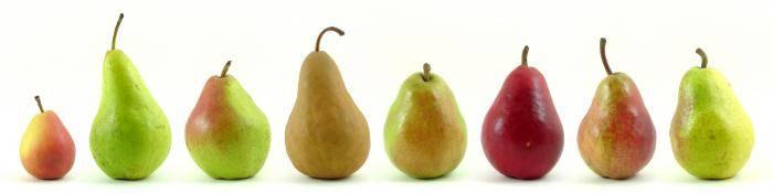 Груша пакхам описание сорта где растет калорийность фото