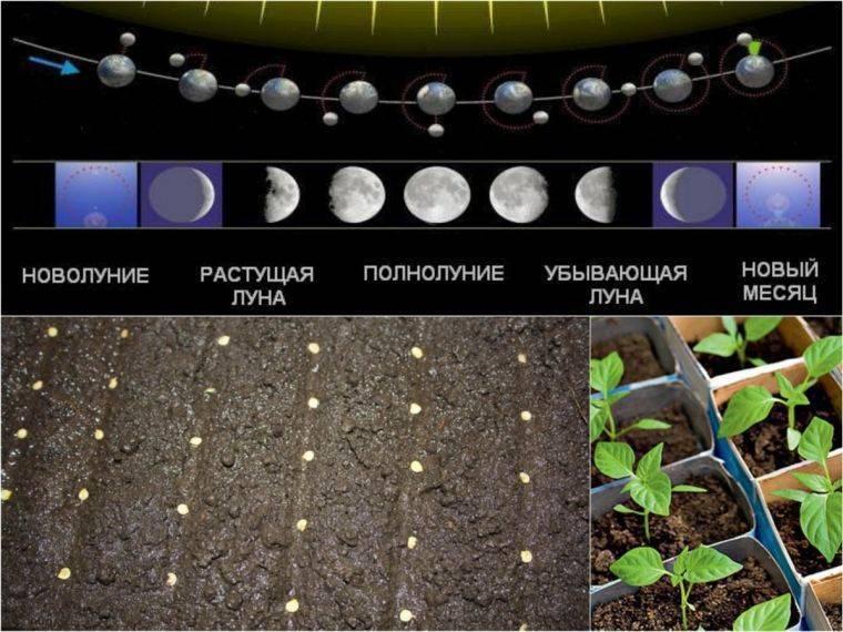 Как вырастить баклажаны в открытом грунте в подмосковье: методы выращивания, сроки посадки семян на рассаду, уход и высадка саженцев