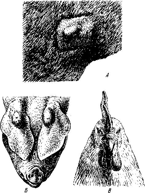 Паратуберкулез