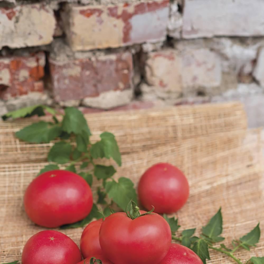 Томат декоративный арбузик: урожайность, описание, характеристики, отзывы