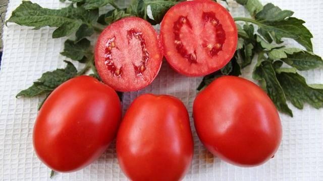 Томат земляк: описание раннего урожайного сорта, фото и отзывы огородников