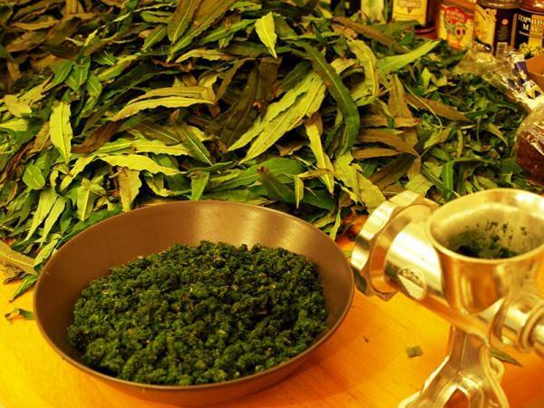 Ферментация листьев смородины и малины, как приготовить ферментированный чай