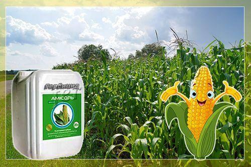 Гербициды для кукурузы – какие лучше использовать, отзывы