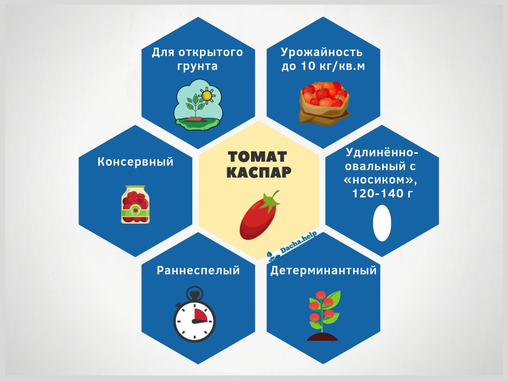 Томат каспар — характеристика и описание сорта, фото