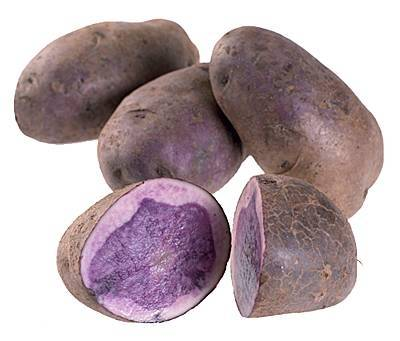 Сорт картофеля гулливер: характеристика, агротехника выращивания