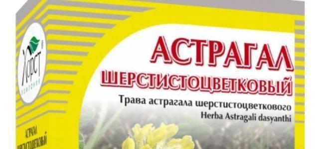 Применение травы астрагала внародной медицине, лечебные свойства ипротивопоказания