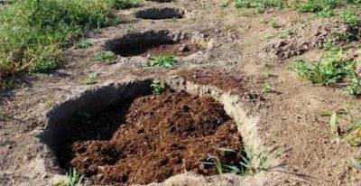 Как правильно выращивать садовую голубику – советы по посадке и уходу