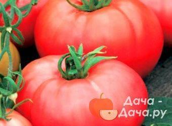 Томат Алтайский оранжевый: описание и характеристика сорта