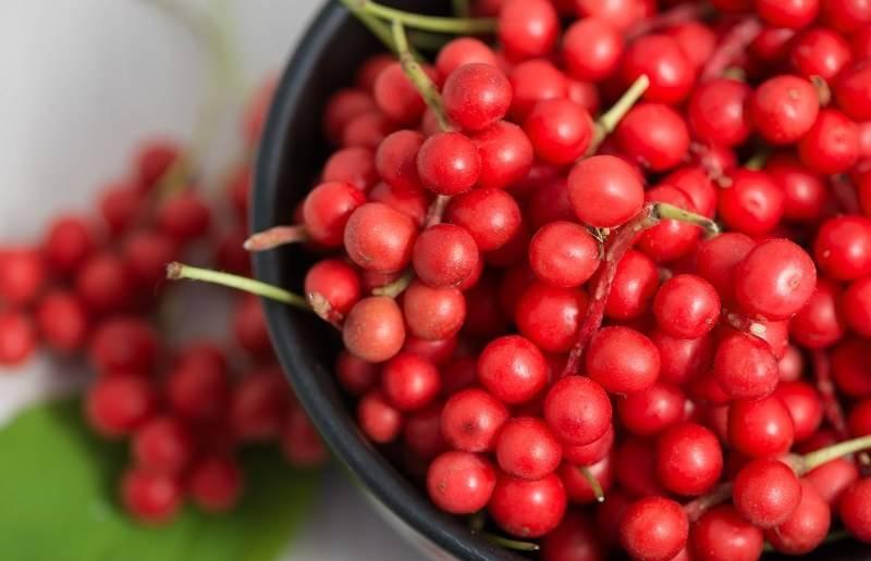 Лечебные свойства и противопоказания лимонника китайского