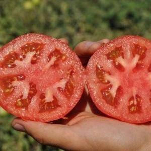 Секреты рекордных урожаев дважды в сезоне — томат махитос f1: описание сорта и характеристики