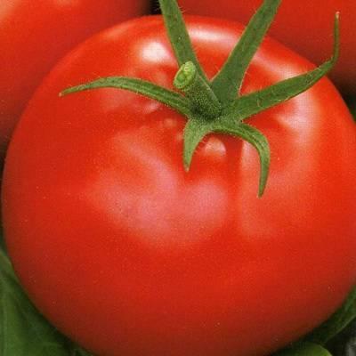 Гибрид томата «афродита f1»: фото, отзывы, описание, характеристика, урожайность