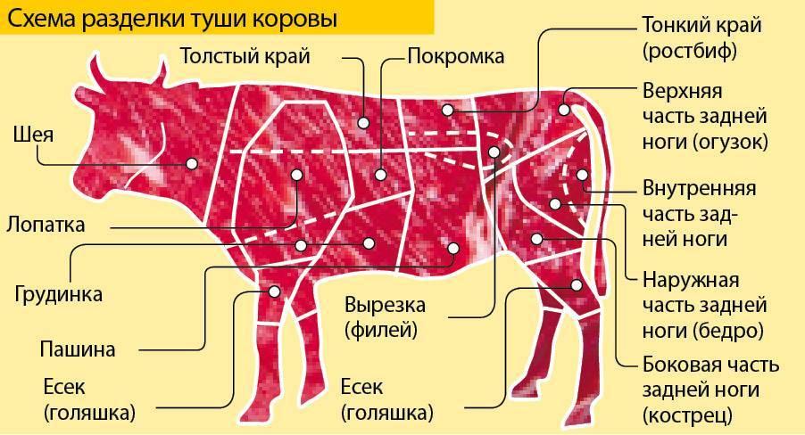 Вырезка у свиньи. изучаем строение тушки свиньи — что где находится?