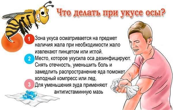 Что надо делать, если ребенка укусила пчела или оса
