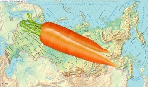 Особенности выращивания моркови в подмосковье и всей средней полосе россии. когда сажать овощ?