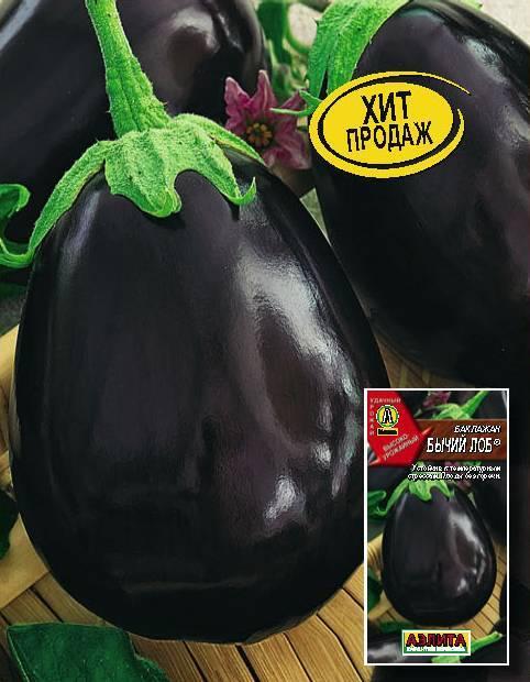 """Баклажан сорта """"бычий лоб"""". фото, описание, отзывы?  - еда и кулинария - вопросы и ответы"""