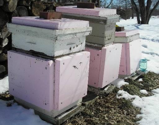 Подготовка пчел к зимовке на улице или в теплице