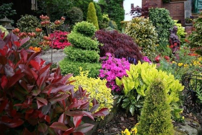 Хвойные растения для сада с фото и названиями