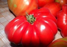 Рейтинг самых урожайных сортов томатов
