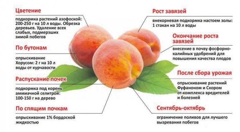 Описание и характеристика персика сорта золотой юбилей, посадка и уход