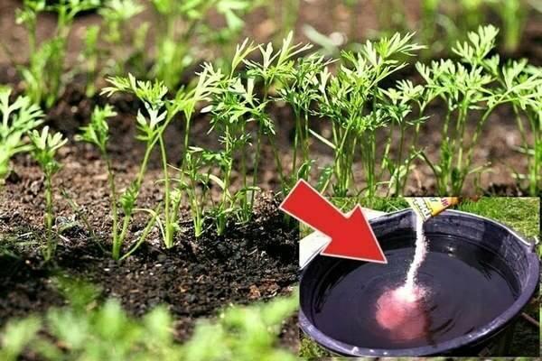 Питательный раствор цитовит (для растений) - состав, правила использования - общая информация - 2020
