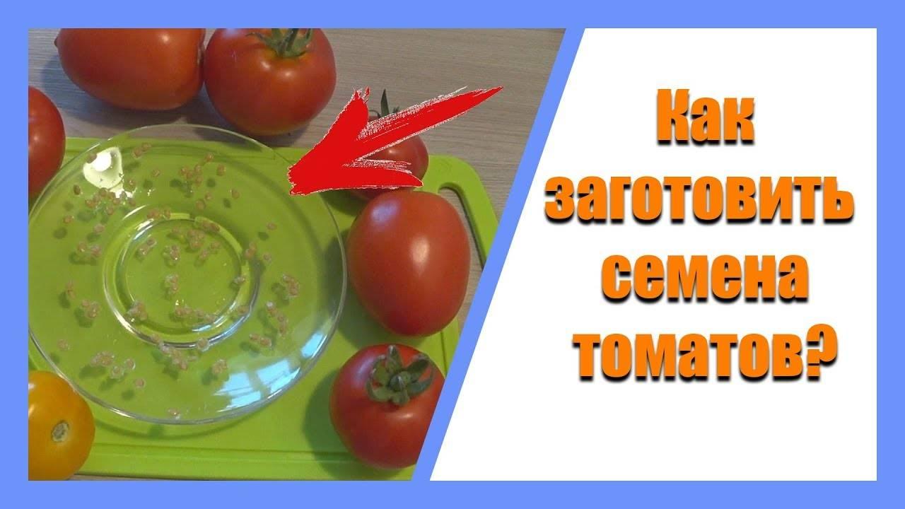 Как собрать семена томатов в домашних условиях быстро и просто