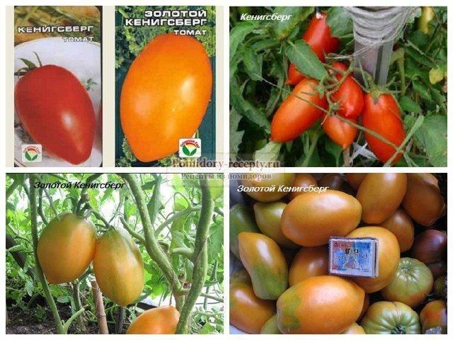 Описание сорта винограда альфа, характеристики урожайности и особенности выращивания