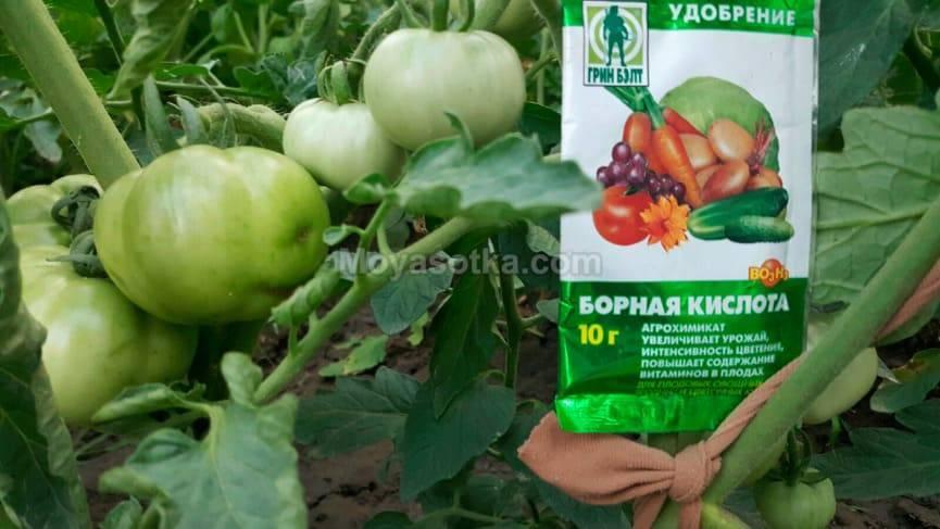 Борная кислота для помидоров — опрыскивание томатов, польза или вред