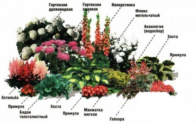 Миксбордер (76 фото): что это такое, схемы посадки многолетников в ландшафтном дизайне, подбор растений своими руками