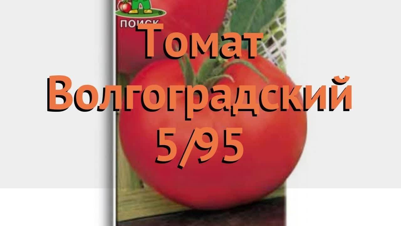 """Томат """"волгоградский скороспелый 323"""": особенности, описание и фото сорта"""