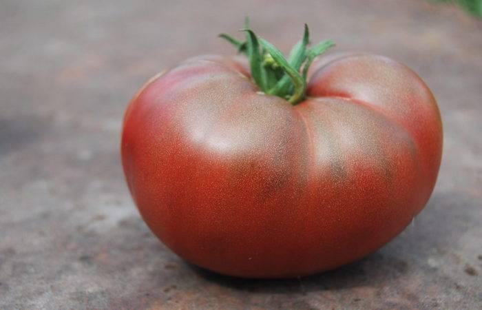 Характеристика и описание томатов «черный барон»