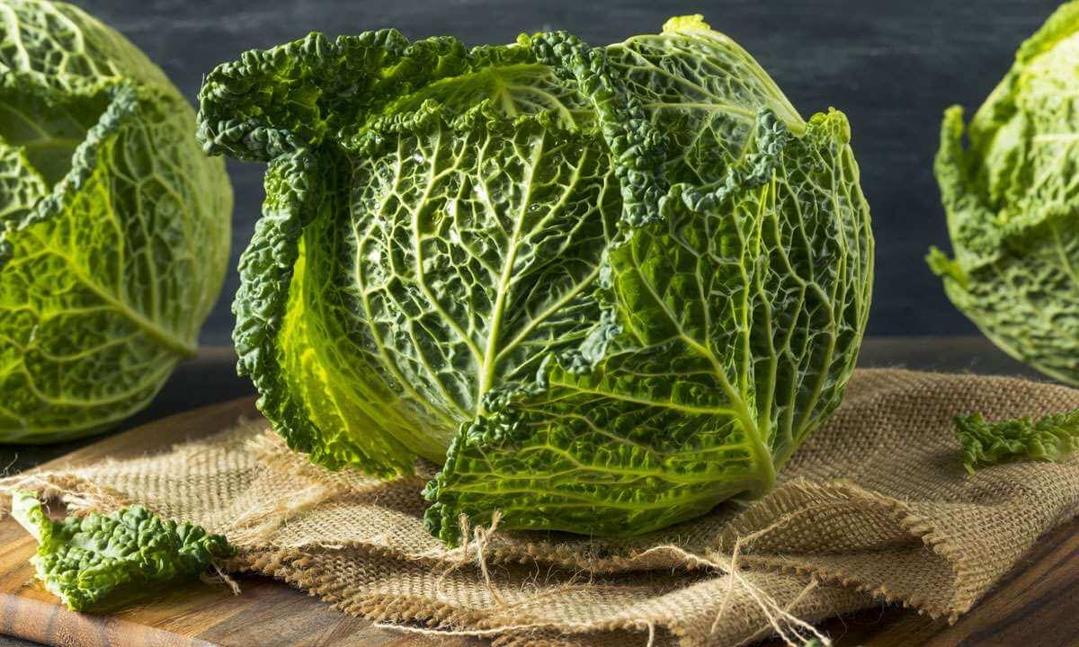 Рецепты ссавойской капустой: новый вкус привычных блюд