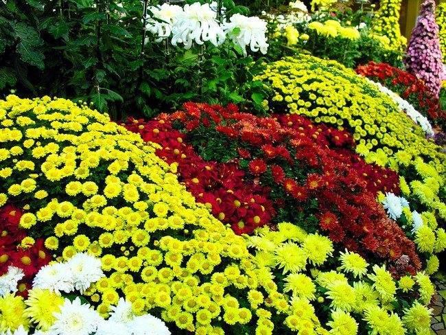 Чем подкормить комнатные растения – выбираем идеальные удобрения для цветов на подоконнике