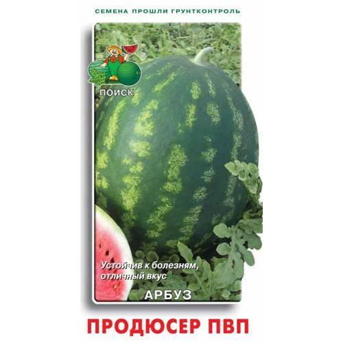 Характеристика и описание арбуза сорт продюсер: выращивание, сбор и хранение