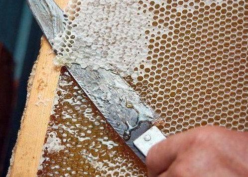 Пчелиный забрус: состав, полезные свойства, применение