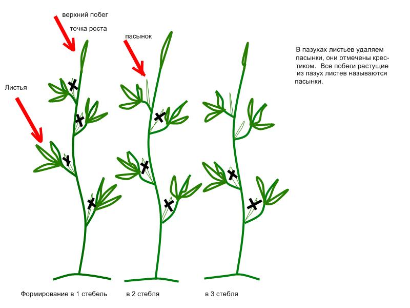 Резервы урожайности томатов – как изменить в свою пользу